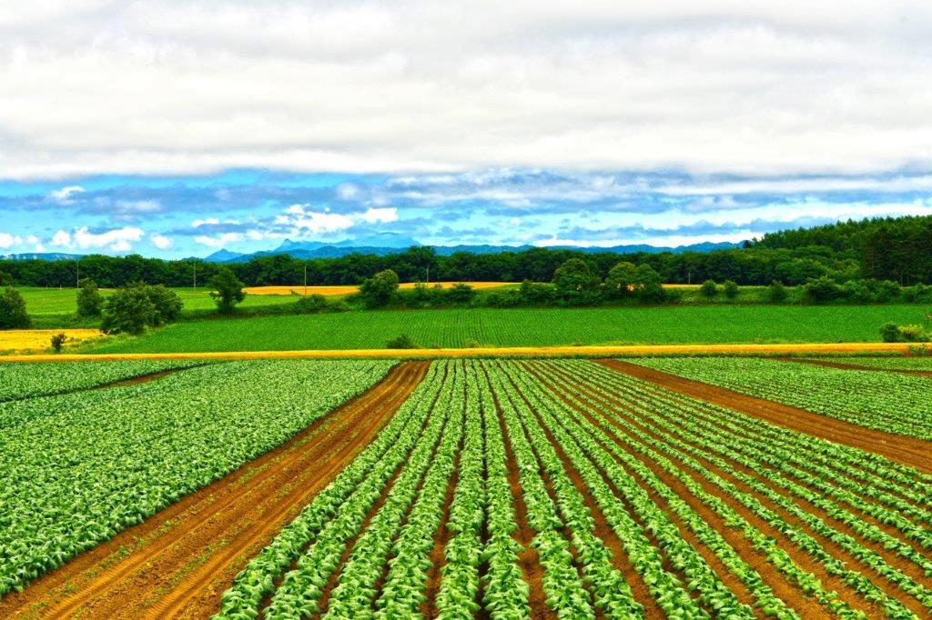 農業経営者必見│経営を改善する3つの交付金とその具体的な導入事例